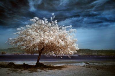 Hermosas fotografías de árboles