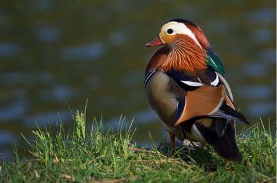 Hermosas fotografías de aves