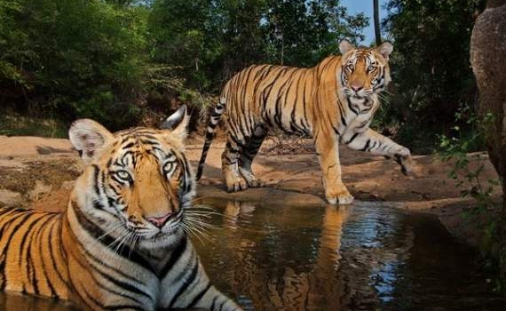 Los mejores fondos de pantalla del 2012 con la calidad de National Geographic