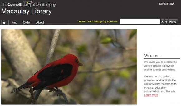 Impresionante archivo de sonidos y videos de vida silvestre