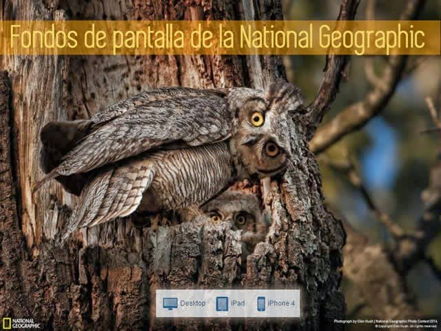 94 espectaculares fondos de pantalla de la National Geographic