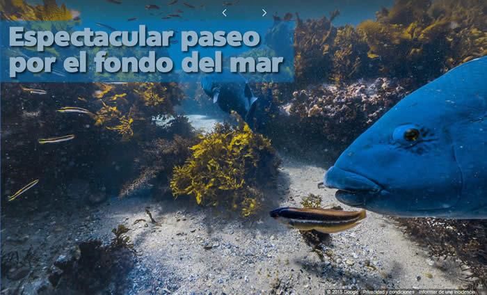 dia-de-oceanos-paseo-por-el-fondo-del-mar