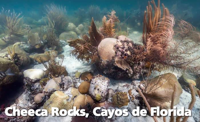 oceanos-florida