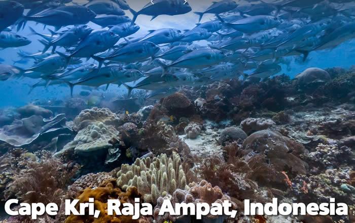 oceanos-indonesia