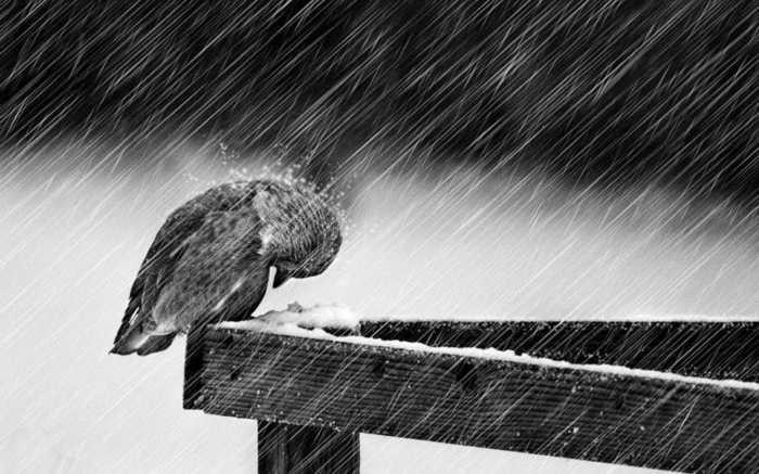 fondo-pantalla-pajaro-nieve