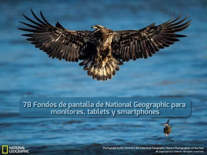 78 Fondos de pantalla de National Geographic para monitores, tablets y smartphones