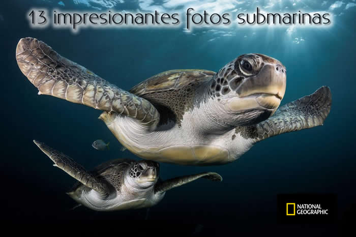 Las 13 fotos submarinas más espectaculares de National Geographic