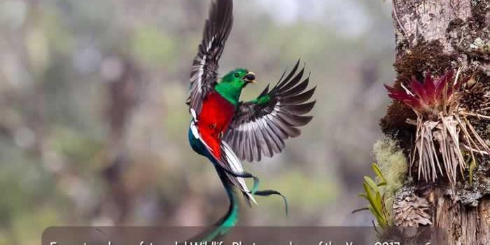 Espectaculares fotos del Wildlife Photographer of the Year 2017 y más