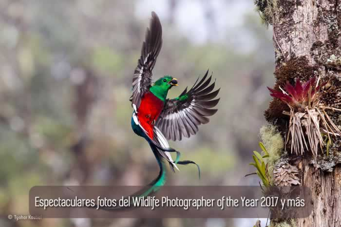 Espectaculares fotos del Wildlife Photographer of the Year 2017 y más