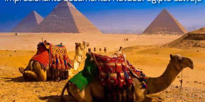 Impresionante documental NatGeo: Egipto salvaje
