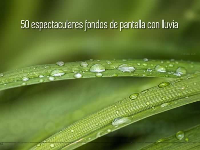 50 espectaculares fondos de pantalla con lluvia