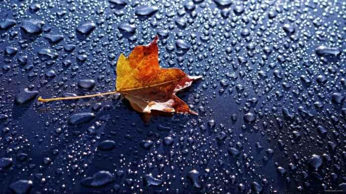 Fondo de pantalla de lluvia gratis