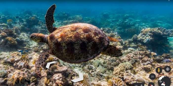 Explora las bellezas del mundo marino desde tu casa
