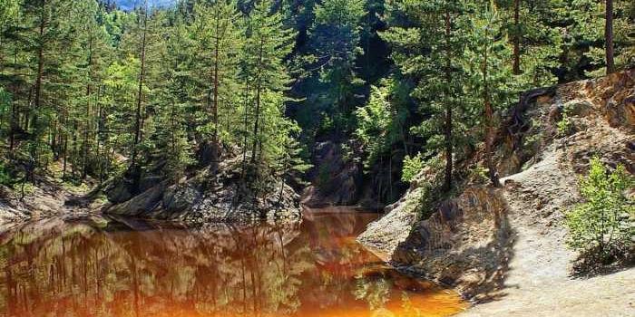 Sonidos de bosques de todo el mundo para descansar y relajarse