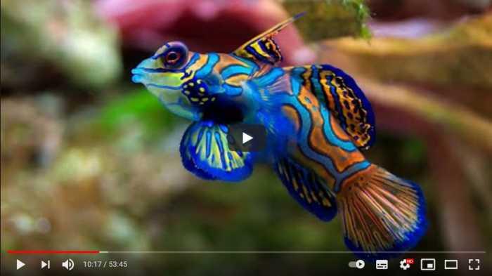 Documental gratuito: Los colores del agua